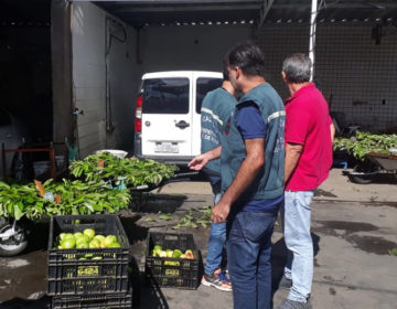 PJF interdita depósito irregular de frutas e doa mercadoria para instituições