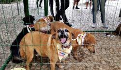 Primeiro evento de adoção de animais especiais do Canil Municipal…