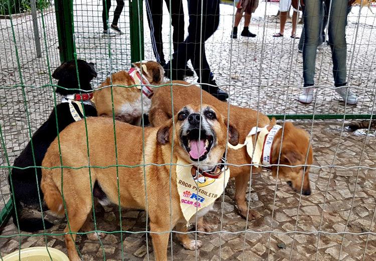 Primeiro evento de adoção de animais especiais do Canil Municipal garante novo lar para 19 animais