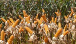 Agricultura e preservação ambiental podem andar juntas, diz estudo