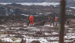 Projeto garante defesa de animais em casos de desastres ambientais