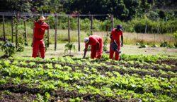 Penitenciária de Muriaé cria projeto para abastecimento de hortas