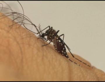 Em um ano, incidência da dengue no país aumenta 600%