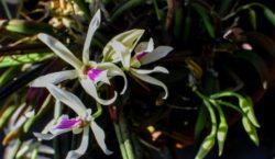 Jardim Botânico recebe mais de 150 orquídeas