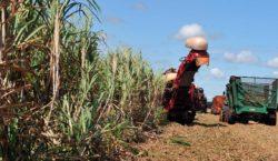 Safra de grãos deve crescer 6,3% e fechar com recorde…