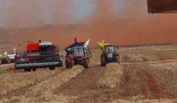 IBGE estima queda de 1% na safra de grãos em…