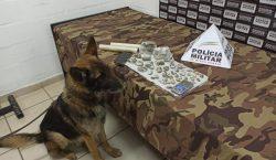 Com auxílio de cão farejador, PM localiza drogas escondidas debaixo…