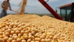 BDMG capta US$ 10 milhões para financiar agronegócio