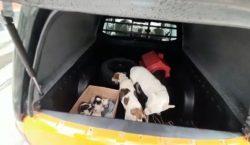 Dez cães são resgatados em operação da Polícia Civil no…
