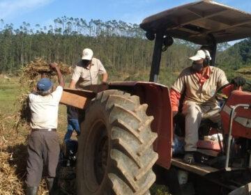 PJF apoia agricultores no processo de colheita de feijão