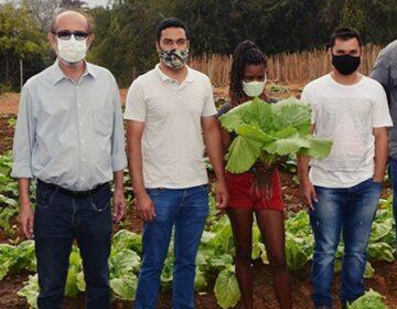 Horta comunitária melhora alimentação e renda de famílias na Zona da Mata