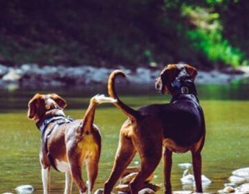 Estado fortalece políticas públicas de proteção a animais domésticos